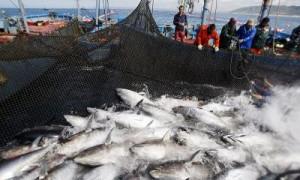 Mayo: el mes del atún rojo en la Costa de Cádiz
