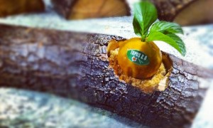 Mandarinas de Pato