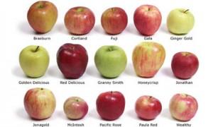 Tipos de manzana más importantes