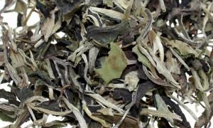 El Té Blanco: El Té de los emperadores