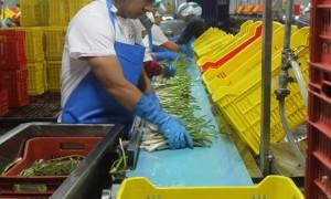 El sector agroalimentario de Perú