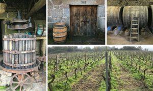 10 vinos de Ribeiro que debes probar