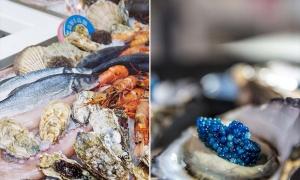 El Caviar Azul, los zafiros del océano