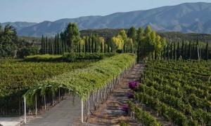 La historia de la bodega de vino más antigua de América